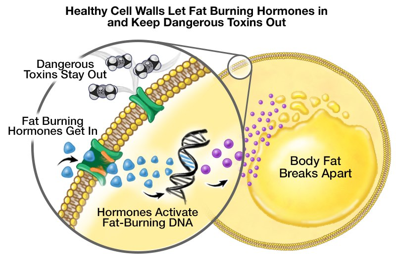 Ce este dieta metabolism ?